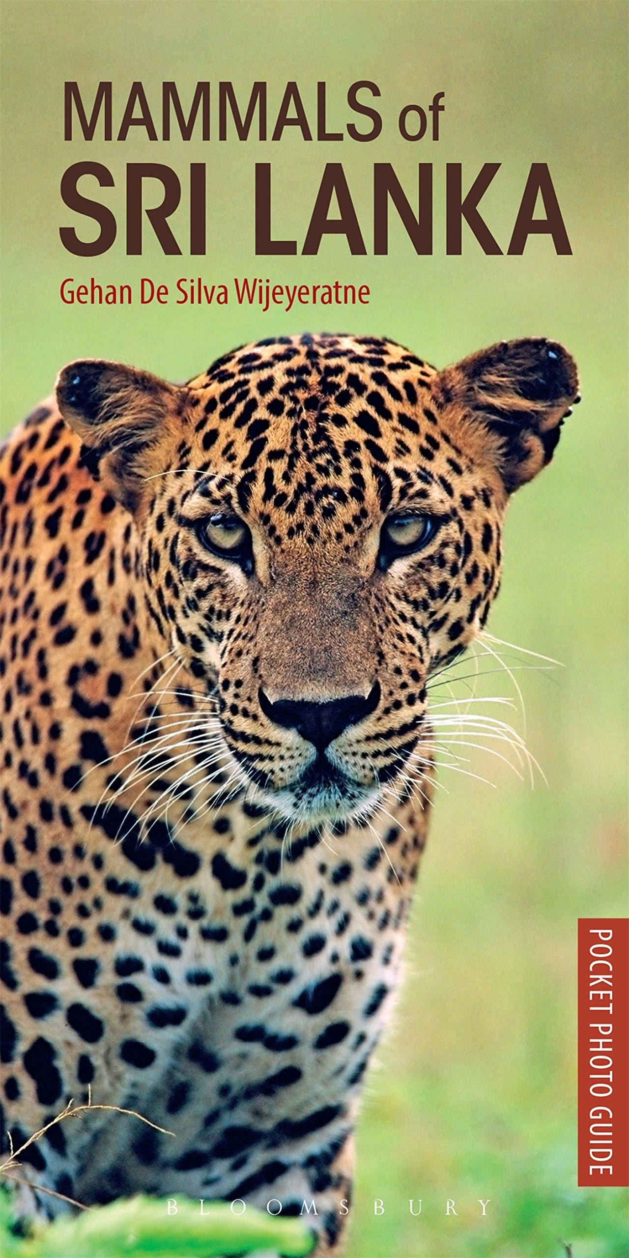 Mammals Of Sri Lanka