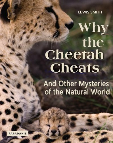 Why the Cheetah Cheats