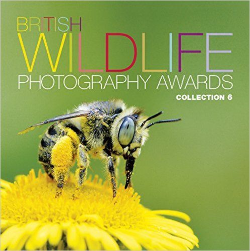 British Wildlife Photography Awards : Collection 6